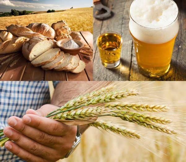 Bread, Beer & Wheat montage
